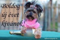 boldog új évet kívánok kutya