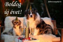 boldog új évet kutyák