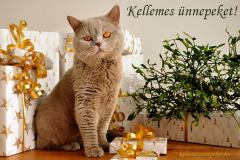 kellemes ünnepeket cicás ajándék
