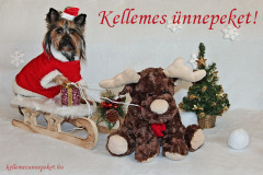 kellemes ünnepeket kutya yorki