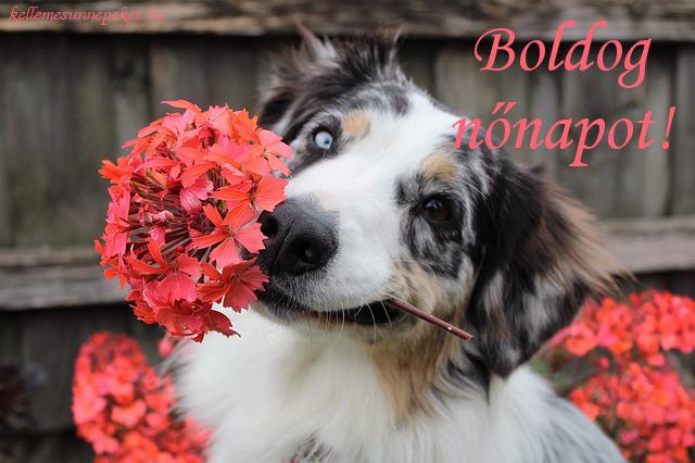 boldog nőnapot kutya