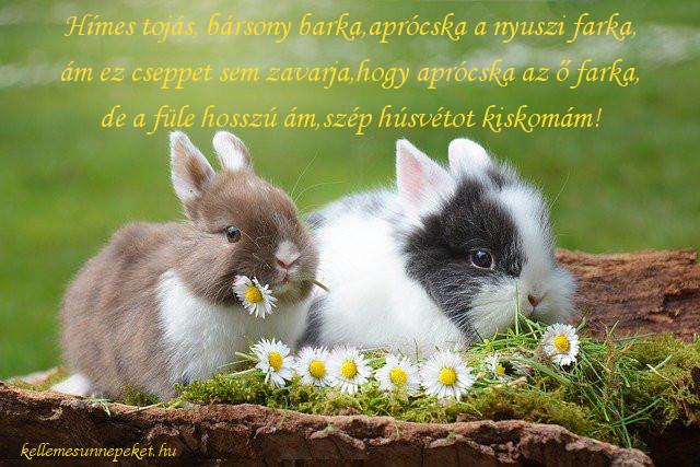 húsvéti üdvözlet nyuszik