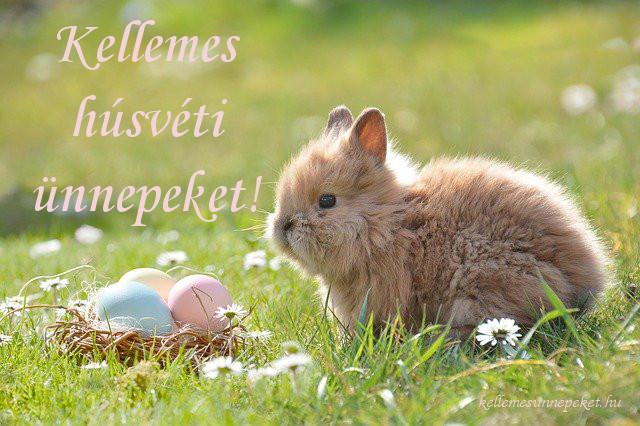 kellemes húsvéti ünnepeket nyuszi, tojás