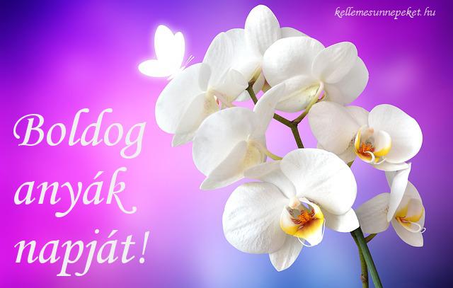 boldog anyák napját orchidea