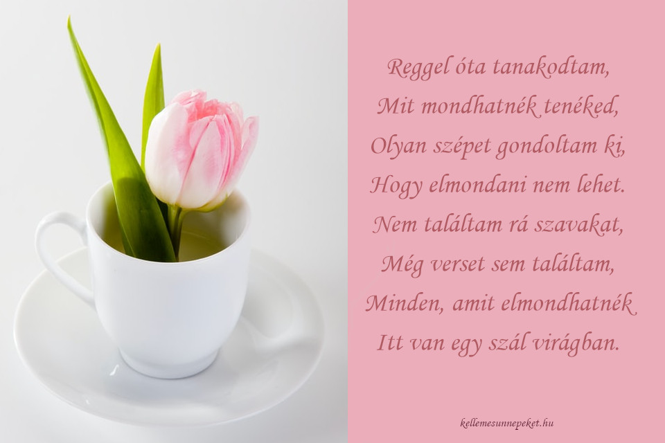 anyák napi köszöntő szál virág, tulipán